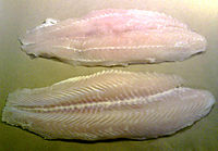 Iridescent Shark Wikipedia