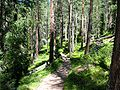 Swiss National Park 111.JPG