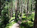 Swiss National Park 111.JPG