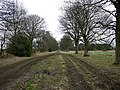 Sycamore-lined drive in winter - geograph.org.uk - 1184663.jpg