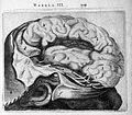 T. Bartholin, Sinistrum cerebri latus in ... Wellcome L0007846.jpg