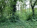 Talus Grands Chemins Fontenay Bois 7.jpg