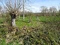 Tardinghen Motte du Bourg sentier du fartz (13).jpg