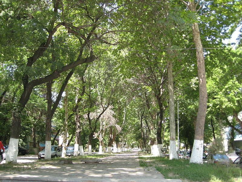 File:Tashkent Shady Alley.jpg