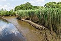 Technisch-biologische Ufersicherung an der Wümme, Versuchsstrecke 1 (50678708241).jpg