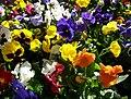Template Flowers2.JPG