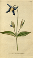 The Botanical Magazine, Plate 65 (Volume 2, 1788).png