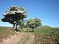 The Pennine Way climbing Cosca Hill - geograph.org.uk - 1900696.jpg