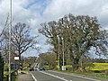 The Ridgeway, Enfield, looking north - geograph.org.uk - 370960.jpg