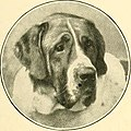 The new book of the dog - a comprehensive natural history of British dogs and their foreign relatives, with chapters on law, breeding, kennel management, and veterinary treatment (1911) (14577002908).jpg
