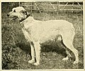The new book of the dog - a comprehensive natural history of British dogs and their foreign relatives, with chapters on law, breeding, kennel management, and veterinary treatment (1911) (14760548321).jpg