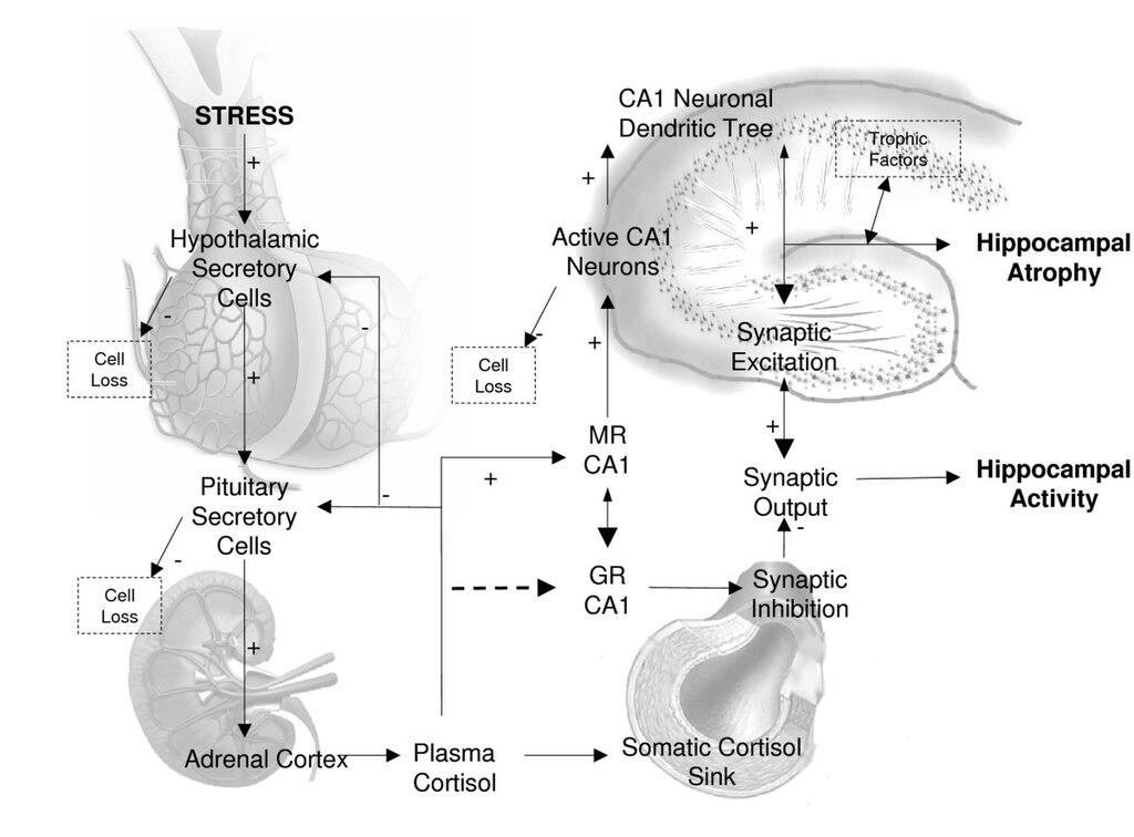 relationship between cortisol and allergies