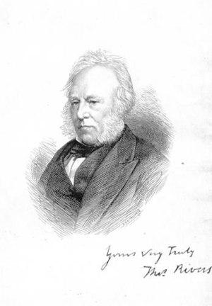 Thomas Rivers (nurseryman) - Thomas Rivers, 1873 drawing
