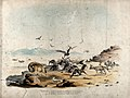 Three types of hyena and many vultures surrounding a kill on Wellcome V0021565.jpg