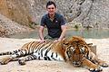 Tigertemple.jpg