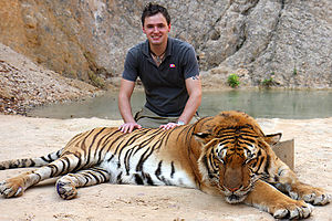 English: Tiger temple, where it is possible to...
