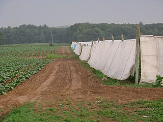 Tobacco field in East Windsor, Connecticut