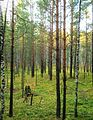Tomsky District, Tomsk Oblast, Russia - panoramio (163).jpg