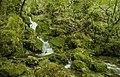 Torrente Centa - Parco fluviale.jpg