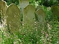 Tower Hamlets Cemetery, June 2015 16.jpg
