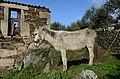 Tralhariz, Carrazeda de Ansiães, Portugal (8352975705).jpg