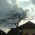 Tree, sky, top roof.jpg