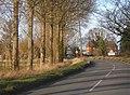 Tree-lined road, Hemingstone - geograph.org.uk - 669316.jpg