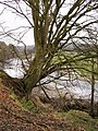 Tree and River Liddel - geograph.org.uk - 346380.jpg