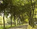 Tree tunnel^2 - panoramio.jpg