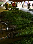 Trees for Troops, the SPIRIT of giving 120516-F-JC454-019.jpg