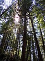 Trees in British Columbia.jpg