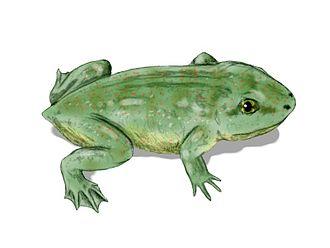 Salientia - Life restoration of Triadobatrachus massinoti