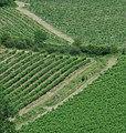 Tuscany vineyard.jpg