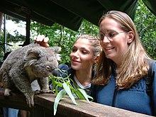 deux jeunes femmes souriant en caressant un koala dans une réserve