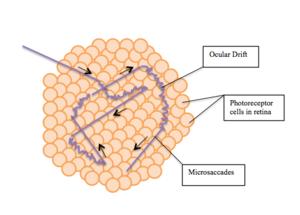 Fixation (visual) - Microsaccades and Ocular Drifts
