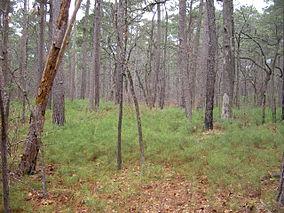 Tyler State Park (Texas)-0125.JPG