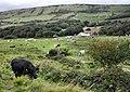 Tyneham Farm and Povington Hill - geograph.org.uk - 1521792.jpg