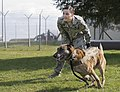 U.S. Air Force Staff Sgt. Shannon Hennessy, a military working dog handler with the 52nd Security Forces Squadron (SFS), releases Katya, a military working dog with the 52nd SFS, during an obedience course 140319-F-NJ596-046.jpg