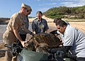 US Navy 090513-N-0535P-032 KEKAHA, Hawaii (May 13, 2009) - Capt. Aaron Cudnohufsky, left, commanding officer of the Pacific Missile Range Facility, Barking Sands, along with other volunteers removes an injured green sea turtle.jpg