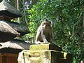 Ubud Monkey Forest Bali26.jpg