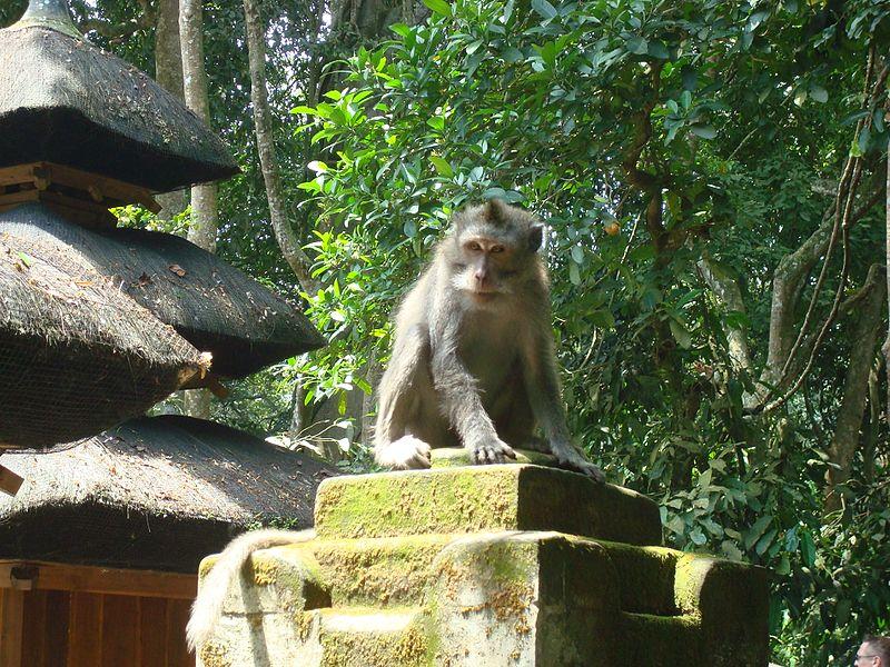 File:Ubud Monkey Forest Bali26.jpg