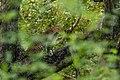 Uday Kiran Leopard BR Hills-4.jpg