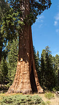 United States - California - Sequoia National Park - 10.jpg