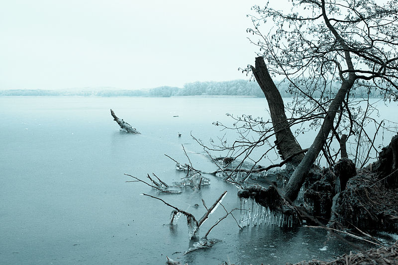 File:Uprooted and Frozen (5448031632).jpg