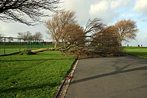 Central Park, Plymouth - An uprooted tree after a storm