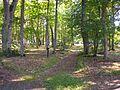 Uue-Põltsamaa mõisa park.jpg