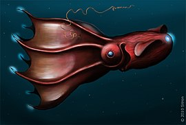 Vampire squid - Simple English Wikipedia, the free encyclopedia
