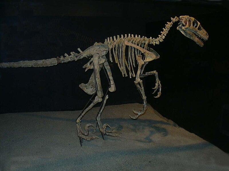Ficheiro:Variraptor mechinorum.jpg