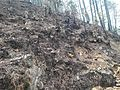 Vegetation destroyed after 2016 Uttarakhand Forest Fires.jpg
