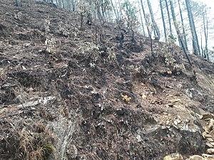 2016 Uttarakhand forest fires - Vegetation destroyed in a forest near Dhaulinag Temple in Bageshwar district